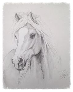 Drawing of a Haflinger - by Mirelle Vegers, Equine Artist
