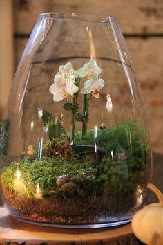Mini ecosystem with succulents. Mason jars, cloche, vintage glass baby bottles are perfect to create a serene tablescape. This has a mini orchid.