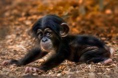 A cute little #monkey