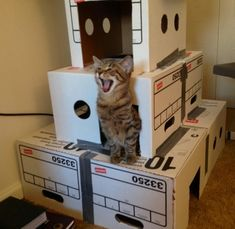 Marvel at this feline in a box fort.  i need to make my cat a box fort.  I think he would like it as much as those expensive cat trees.