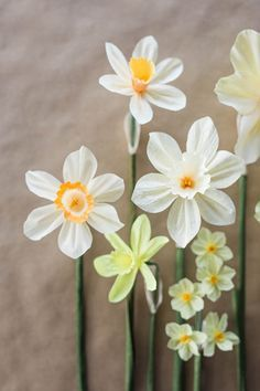 Paper Daffodils : Design*Sponge // Tutorial by Kate Alarcón // Photography & Styling by Grace Kim