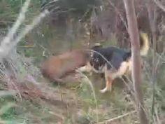 Big Boar Vs Many dogs World, Big, Amazing, Youtube, The World, Youtubers, Youtube Movies