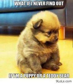 The cuteness is gonna kill me..... ♥