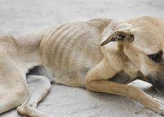 maus-tratos a cães