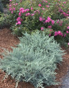 Gartengestaltung rosen rosenbeet anlegen begleitpflanzen for Formaler gartenteich anlegen