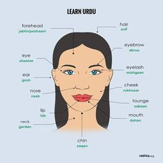 Parts of the Face in Urdu