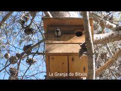 carbonero común (Parus major)  www.lagranjadebitxos.com Parus Major, Bird, Outdoor Decor, Home Decor, Nesting Boxes, Entry Ways, Birds, Homemade Home Decor, Interior Design