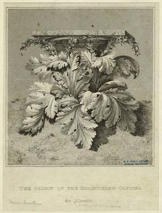 """Image from """"Guide for Drawing The Acanthus""""."""