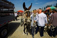 Bustling Uyghur animal bazaar in Khotan, Xinjiang, China.