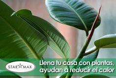 Tener plantas de interiores ayudan a circular el aire, hacen tu ambiente más agradable y lo refrescan ahorrando energía   -------     Having interiors plants helps you to refresh your spaces and save energy