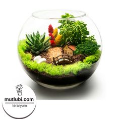 Miss Terrarium with house