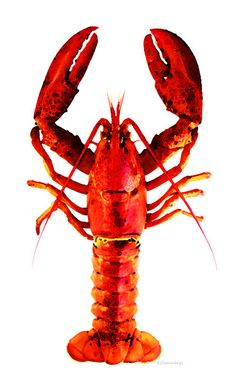 Red Lobster - Full Body Seafood Art Art Print by Sharon Cummings. All prints are professionally printed, packaged, and shipped within 3 - 4 business days. Choose from multiple sizes and hundreds of frame and mat options. Lobster Art, Crab And Lobster, Live Lobster, Red Art, Canvas Art Prints, Painting On Wood, Female Art, Fused Glass, Full Body