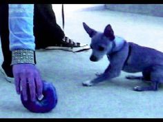 15 Free Top Quality Dog Training Videos - Selected By Pippa Mattinson