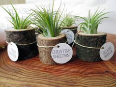 Garden-themed favors make for great DIYs. These air plant logs can serve as favors, name cards and table decor all in one >> http://www.hgtvgardens.com/weddings/garden-inspired-wedding-favors?s=12?soc=pinterest