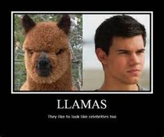 llama funny