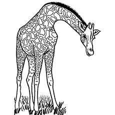 Top 25 Free Printable Wild Animals Coloring Pages Online Animal Coloring Pages Giraffe Coloring Pages Wild Animals Drawing