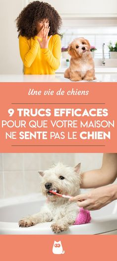 10 Best Chien De La Maison Images Dog Houses Luxury Dog