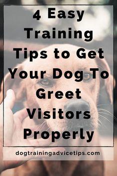 Dog Obedience Classes, Dog Hand Signals, Basic Dog Training, Aggressive Dog, Corgis, Dog Behavior, Chow Chow, Dog Food, Corgi