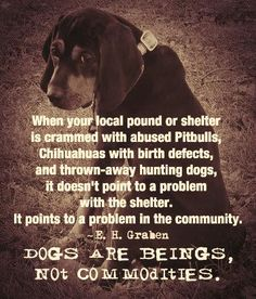 Please adopt, spay and neuter, and please don't buy. Breeders need to get a job!