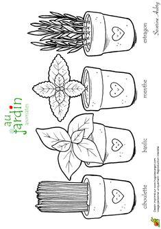 Coloriages jardinage aromates
