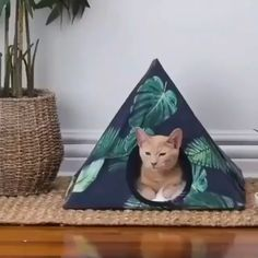 Diy Crafts Hacks, Diy Projects, Diy Cat Tent, Cat House Diy, House For Cats, Cat Hammock, Cat Room, Cat Accessories, Animal Projects