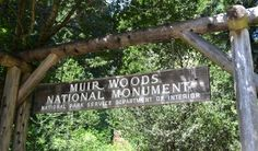 Roots-of-Muir-Woods-San-Francisco-Travel-Guide-Guiddoo