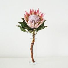 King Protea by Eleanor Turvey