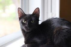queen nina the beautiful black cat, reincarnated from an egyptian queen