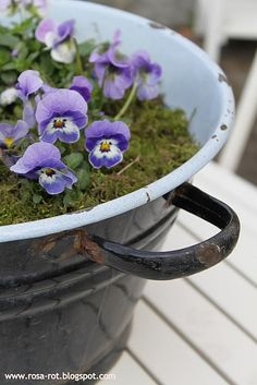 Pansies and Moss oh my!