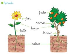 Mi rinconcito de Primaria: Las plantas Plant Science, Science And Nature, Alternative Education, Spanish Teaching Resources, Calendula, Teaching Science, Botany, Preschool Activities, Trees To Plant