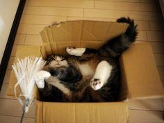 Ahhhh want to huggle!