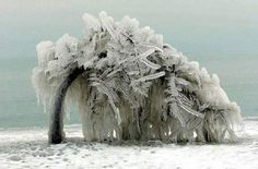 Ice weighing down a tree ~ I'm so thankful we don't have those kind of winters!