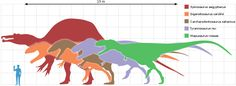 Largest Animals Through the Ages