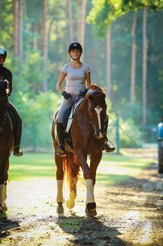 Summer Health Precautions for Horses
