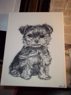 1000+ images about Yorkie on Pinterest | How to draw ...