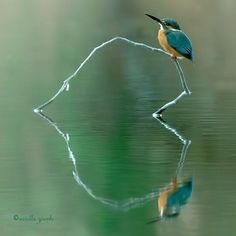 IJsvogel - Kingfisher - Hearts in Nature Beautiful Birds, Animals Beautiful, Amazing Photography, Nature Photography, Heart In Nature, Amazing Nature, Real Nature, Belle Photo, Blue Bird
