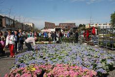 Vrijdag 5 mei Bloemen- en Geraniummarkt in Klazienaveen