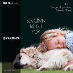 Her canlının sevgiye ve korunmaya ihtiyacı var. 4 Ekim Dünya Hayvanları Koruma Günü Kutlu Olsun 🐇🐿🐙🐢🦀🐳🦍🦒🐘🐝🐞🐥🐶🦊🐱🐹🐰🐨🐸🦅🦆🦋🦐🐡🐄🦃🦔 #4ekimhayvanlarıkorumagünü #degrape #izmir  #home #homedecor #decor #child #animal #dog Movies, Movie Posters, Art, Art Background, Films, Film Poster, Kunst, Cinema, Movie