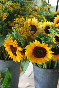Sunflowers - Sow weekly in May and June for a successive bloom from late July to frost. Giant sunflower varieties such as Mammoth and Sunzilla provide their own near-instant screen, but the more delicate ones grow to five feet, are covered in smaller blooms and add a degree of elegance missing in the linebacker versions.