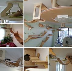 Photos: Truly amazing cat furniture  http://homes.yahoo.com/photos/photos-truly-amazing-cat-furniture-1389812789-slideshow/