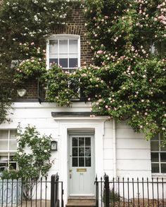 Roses blooming in London