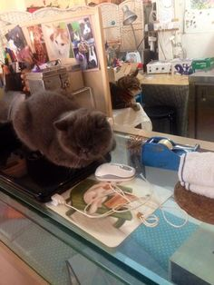 Ah Meow Cat Cafe, Hong Kong: See 21 unbiased reviews of Ah Meow Cat Cafe, rated 3.5 of 5 on TripAdvisor and ranked #3,752 of 6,255 restaurants in Hong Kong.