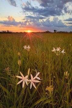 Stars of the Everglades Everglades National Park © copyright by Paul Marcellini.