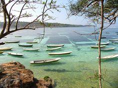 bali - seaweed farm
