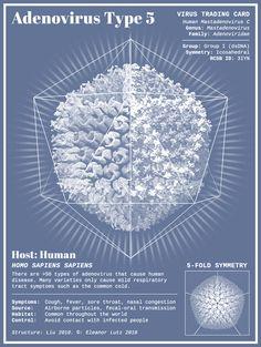 Des cartes d'identité de virus animées - La boite verte