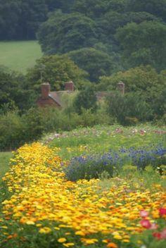 Meadows & Fields