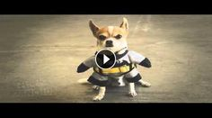 In this fun and original movie, can attend a comic scene played by a sweet chihuahua named Pancho and his master. The two are in the waiting room of a veterinarian.  The