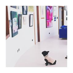 "This photo from my mum of our #Frenchie had made my day, she said ""Frank the art critic"" apparently he was sat there for a good half hour admiring the art  #frenchbulldog #bulldog #puppy #artcritic"