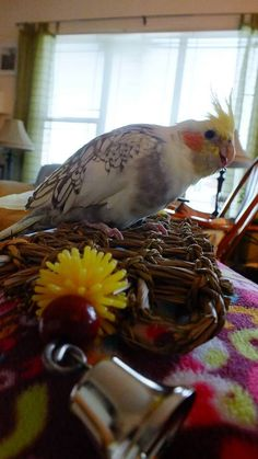 Neelix and his Natural Birdie Waffle match, don't they? Parakeets, Parrots, Bird Toys, Waffle, Feather, Wings, Pets, Natural, Quill