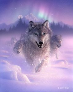 Have a beautiful day with this incredibles wolves.